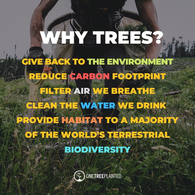 we plant a tree